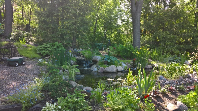 backyard pond and garden