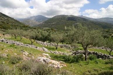 Drystone walls, Crete, Greece (C) Matt Wilson