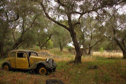 Paxos olive-grove (C) Matt Wilson