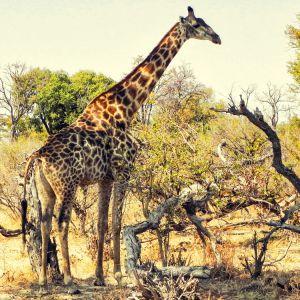 Afrika5.jpg