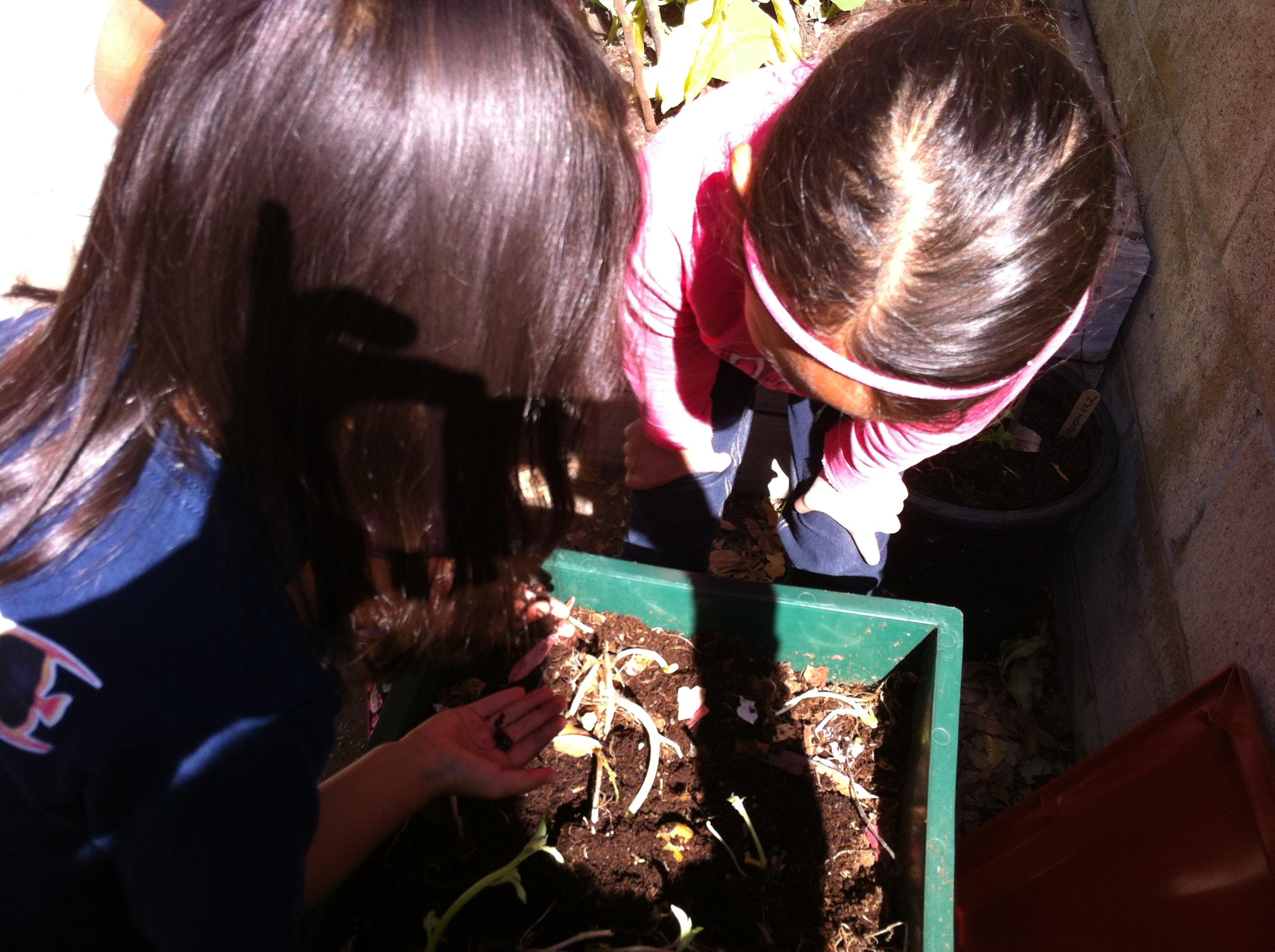 Garden Activities Edible School Garden
