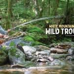 White Mountain Wild Trout