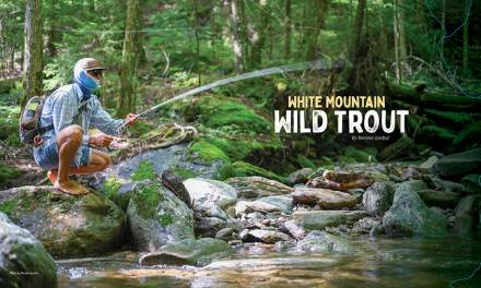 White Mountain Wild Trout