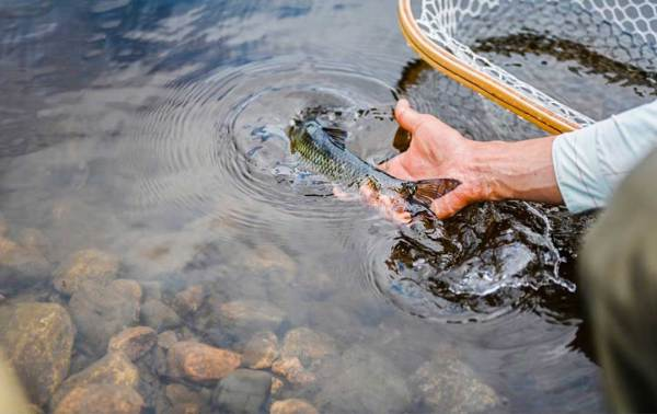 how to keep fish wet and alive
