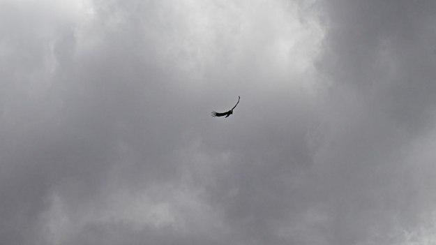 Colca - Condor