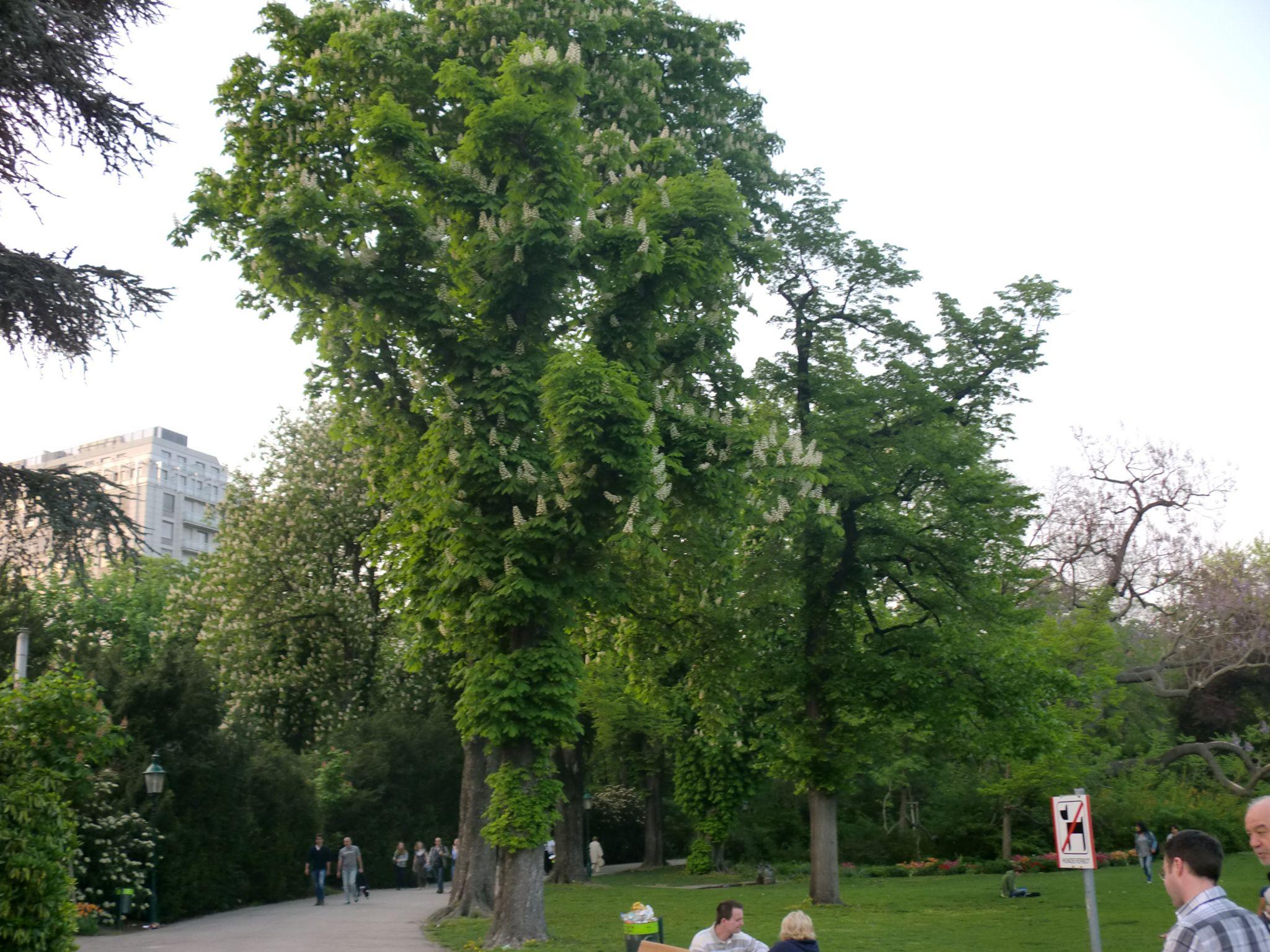 Vienna park 12 1440x1080 - Vienna: elegant beauty