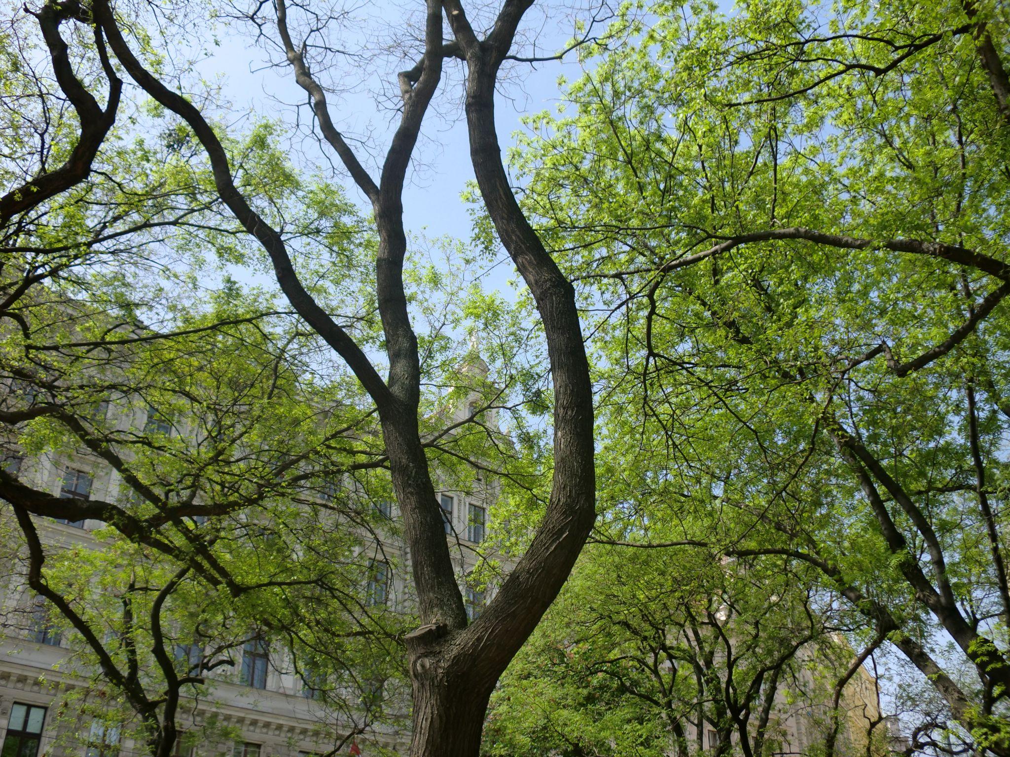 Vienna park 3 1440x1080 - Vienna: elegant beauty