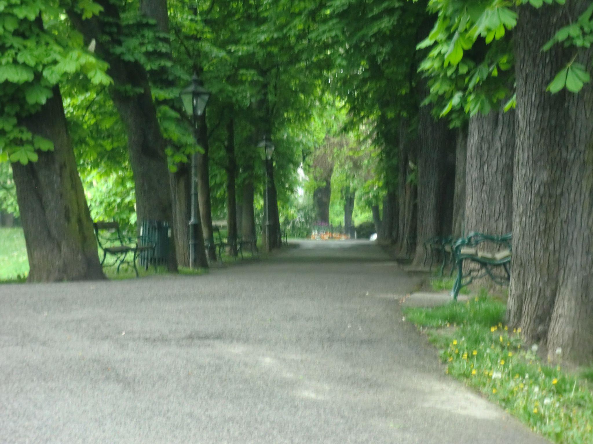 Vienna park 33 1440x1080 - Vienna: elegant beauty