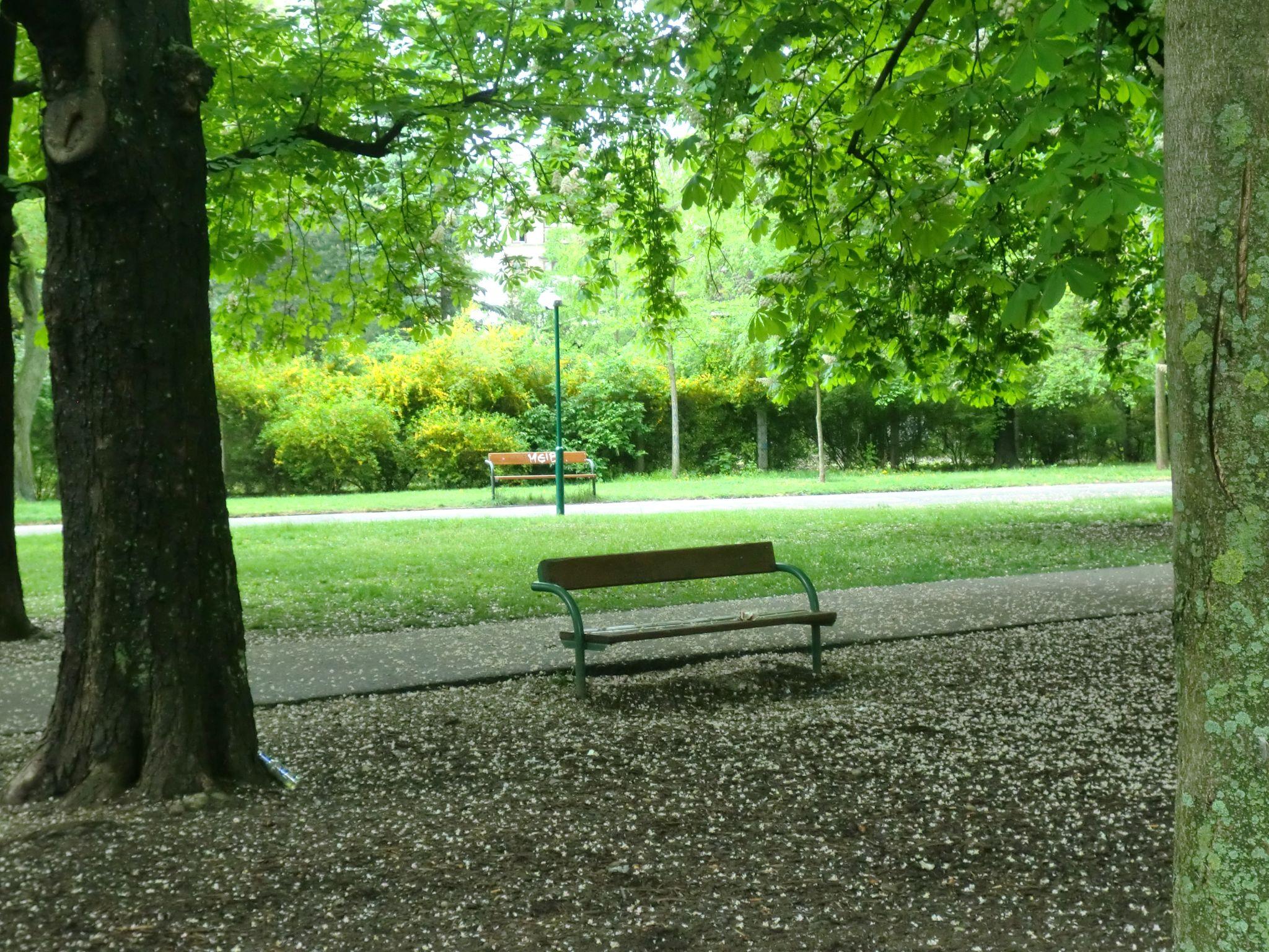 Vienna park 37 1440x1080 - Vienna: elegant beauty