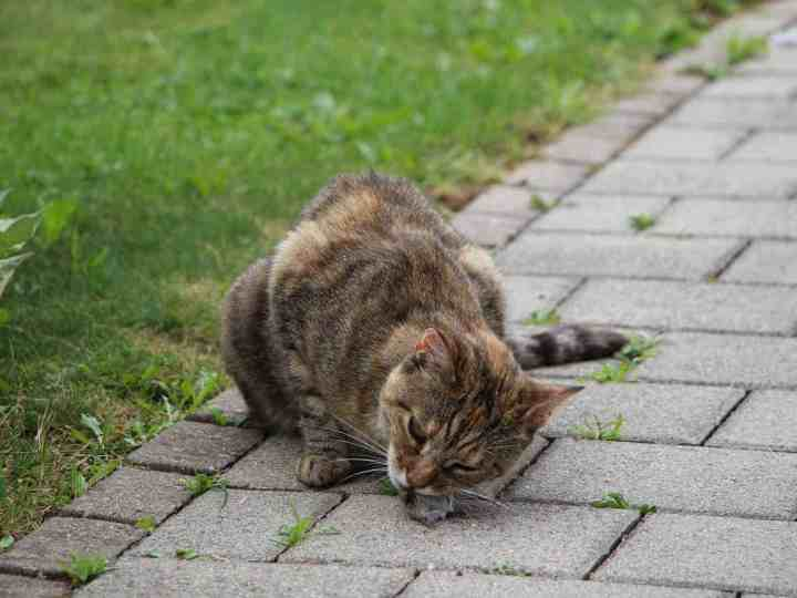 Is a worm cure recommended for cats?