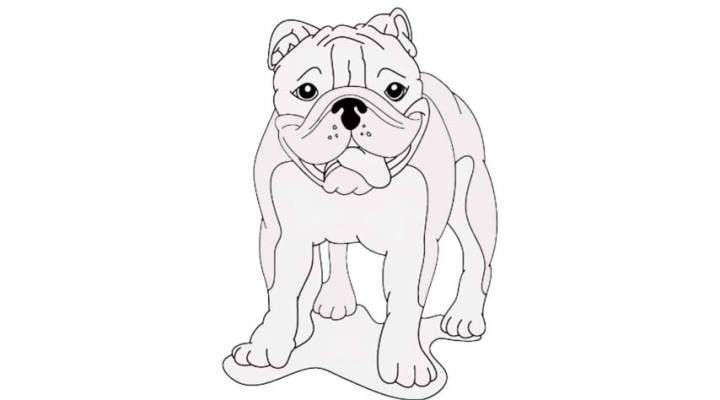 how-to-draw-a-bulldog_11