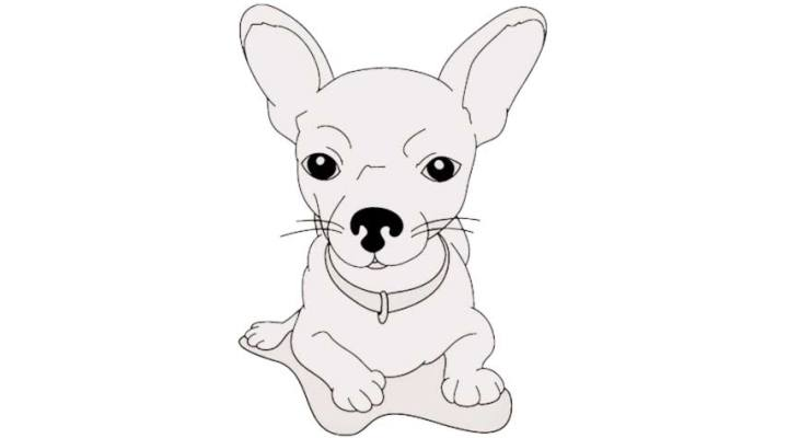 how-to-draw-a-chihuahua_06