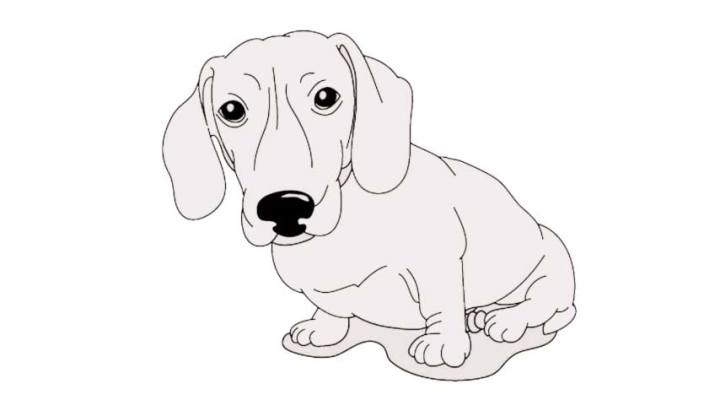 how-to-draw-a-daschund_23