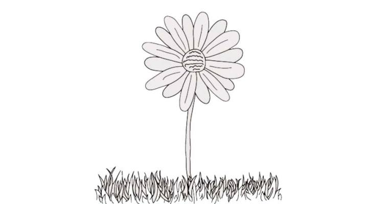 how-to-draw-a-daisy_04