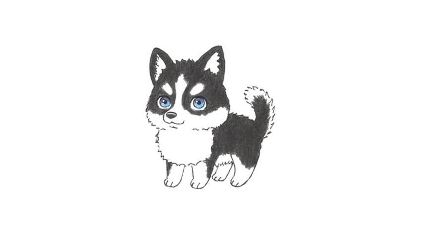 Human faces are not perfectly symmetrical. How To Draw A Cartoon Husky Dog - My How To Draw