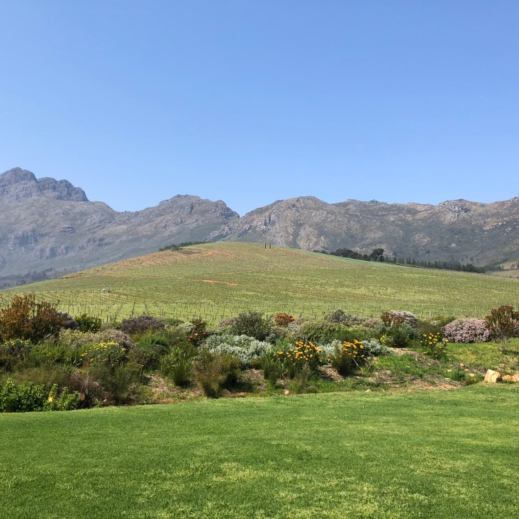 View in Franschhoek valley at the Oldenburg winery
