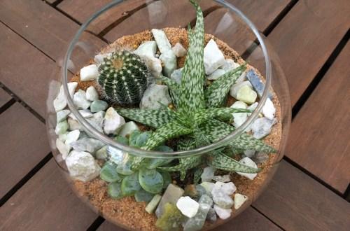 building a cactus terrarium
