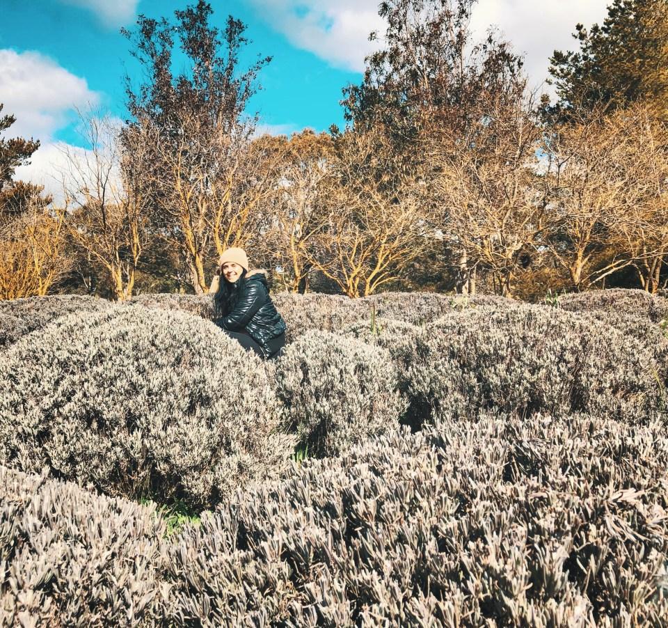 Crystal Brook Lavender Farm