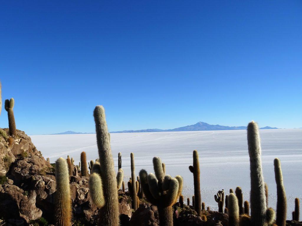 Ile aux Cactus Uyuni