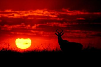 _103299948_mdrum_silhouettes_of_africa-2