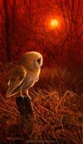 1187-barn-owl-sundown.jpg-nggid041244-ngg0dyn-200x300x100-00f0w010c010r110f110r010t010