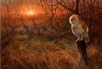 1238-Winter-sun-barn-owl.jpg-nggid041353-ngg0dyn-200x300x100-00f0w010c010r110f110r010t010