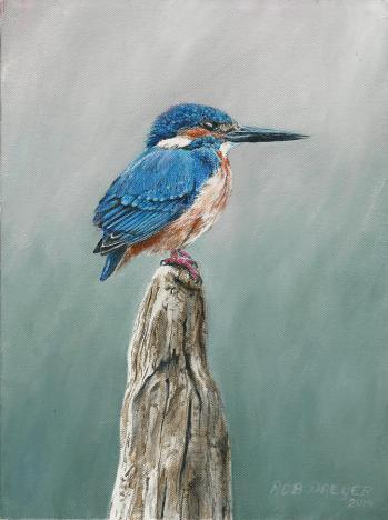common-kingfisher-rob-dreyer-afc