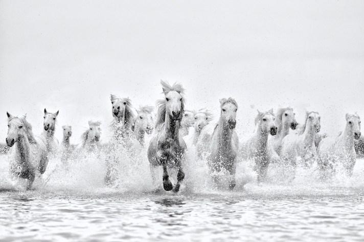 Ejaz-Khan-Earth-Horses-running-in-water-Inspired_D856708