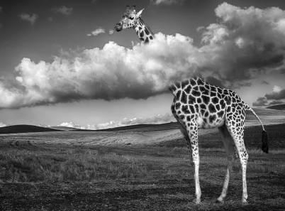 girafe-au-dessus-des-nuages