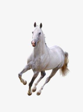 imgbin-running-white-horse-2i9wU4RHh2GFeLhSBMQYJHBLT