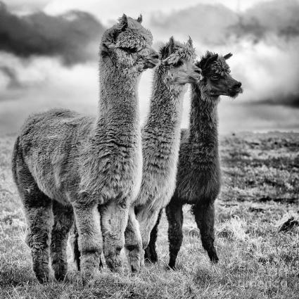 lama-lineup-john-farnan
