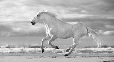 run-white-horses-iii-tim-booth