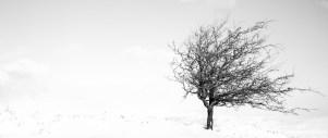 snowtree-small