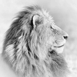 23_wildlife_photograph_in_black_and_white_high_key-3987-900-600-100
