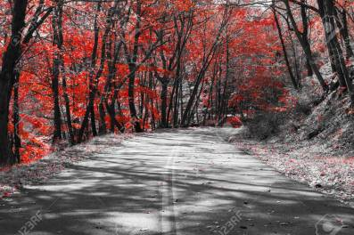 Empty road through a red fall forest in a black and white landscape