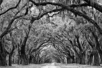 Avenue-of-the-Oaks---Savannah_-2011-_IMG_7783_grande