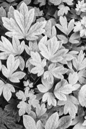 black-and-white-abstract-leaves-christina-rollo