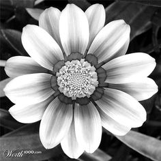 cb7576d29c6413b660042b7b318e2288--pictures-of-flowers-white-picture