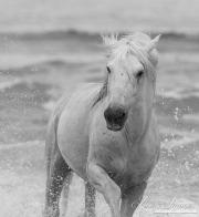fineart-074-seahorseturning.jpg-nggid041684-ngg0dyn-180x0-00f0w010c010r110f110r010t010
