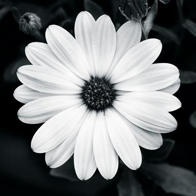 joseph-eta-daisy-light-i_a-L-9320217-0