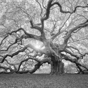 moises-levy-the-tree-square-bw-2_u-l-q12ulvo0