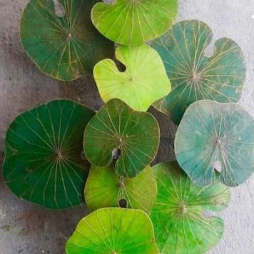 Monotone-Green-Lotus-Living-3-D-Art-copy