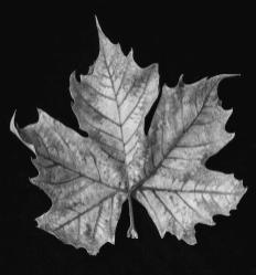 old-leaf-black-and-white-garry-gay