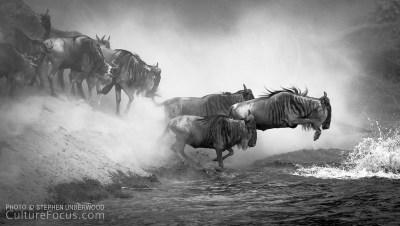 wildebeest-migration-19-L