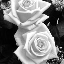 roses-bw
