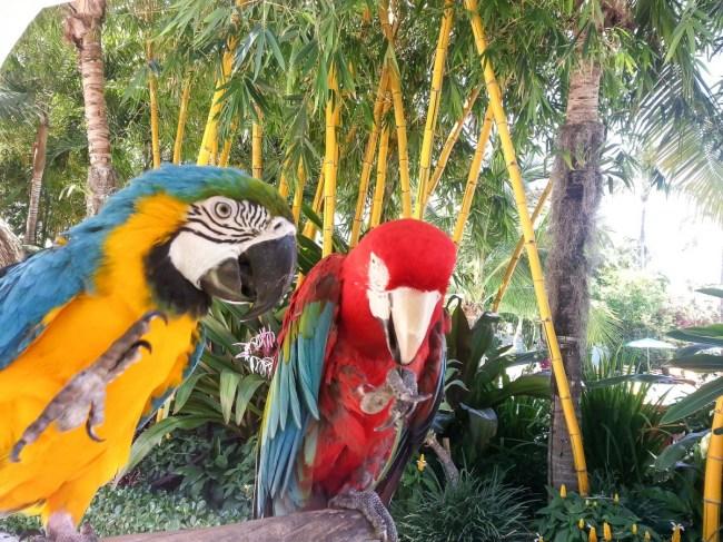 Travel Diary - Sunny Miami-8
