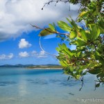 Expedition: Shell Island