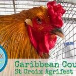 Agrifest: A Caribbean Country Fair