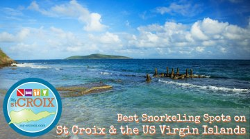 Best Snorkeling on St Croix and the Virgin Islands