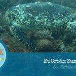St Croix Summer Lovin: Sea Turtle Nesting Season